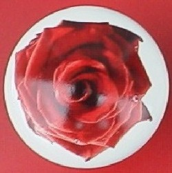 CERAMIC CABINET pull KNOB  PINK RED ROSE ROSES flower