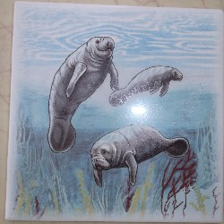 Ceramic Tile Manatee